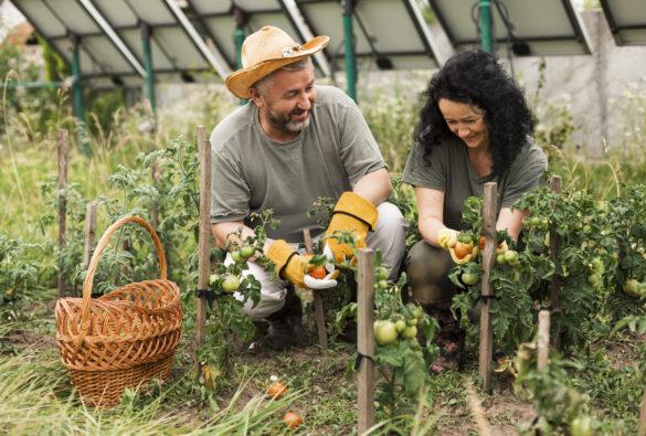 produtor rural pode comercializar